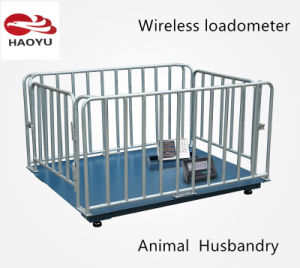 Digital Electronic Platform Weighing Scale for Aminal pictures & photos