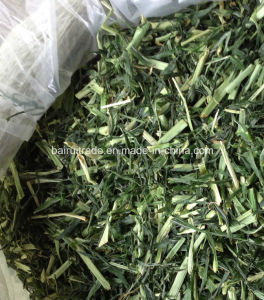 Rabbit Foods Pet Foods Barley Grass for Animal pictures & photos