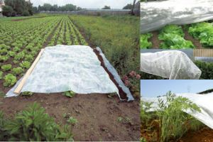 Garden Frost Protection PP Spunbond Fleece with UV pictures & photos