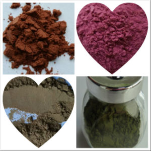Prepared Rehmannia Root Extract/Rehmannia Glutinosa Extract pictures & photos