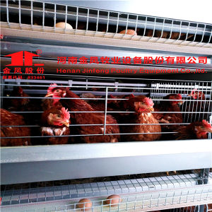 H Type Automatic Layer Chicken Birds Poultry Cages with Best Price pictures & photos