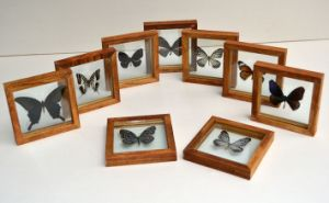 Simplicity Wood Photo Frames for Butterfly Specimens pictures & photos