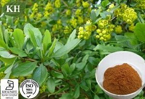 100% Natural Barberry Extract: Berberine 10%; 5: 1; 20: 1 Berberine Hydrochloride 97% ~98% (CAS No.: 633-66-9) pictures & photos