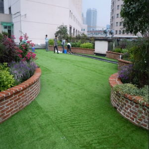 Artificial Decorative Grass Chinese Curly pictures & photos