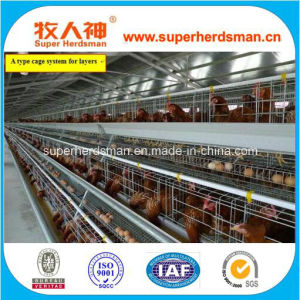 Poultry Feeding Equipment Battery Cage for Layers pictures & photos