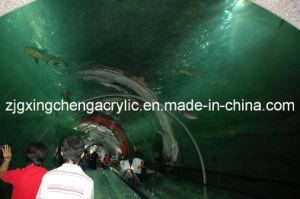 Large Acrylic Aquarium Project pictures & photos