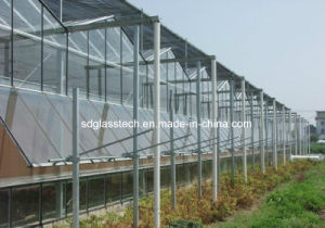 4mm Low Iron Ultra Clear Tempered Greenhouse Wall Glass pictures & photos