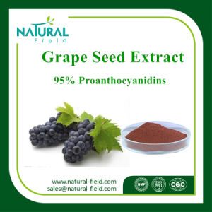 Factory Supply High Quality 95% Proanthocyanidin Grape Seed P. E pictures & photos