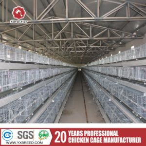 Poultry Equipments Type a Broiler Layer Chicken Battery Cage pictures & photos