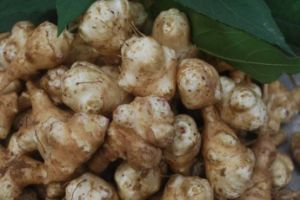 Jerusalem Artichoke Extract 90%Inulin for Prebiotics pictures & photos