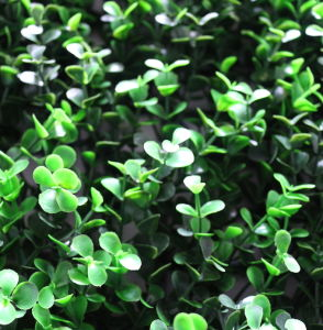 UV Protection Artificial Green Leaves Hedge for Decoration (MW16033) pictures & photos