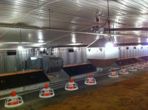 2017 Full Set Automatic Poultry Equipment for Broiler pictures & photos