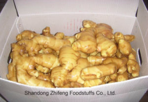 Fresh Ginger with High Quality in 2017 pictures & photos
