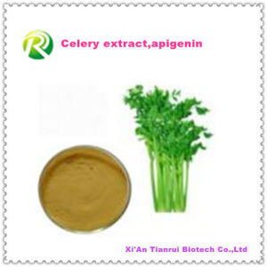 High Quality Factory Supply Directly Natural Celery Extract Powder pictures & photos