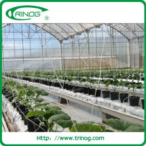 Agricultural Greenhouse with hydroponic growing system pictures & photos