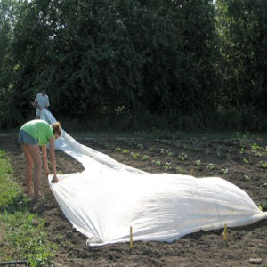 6.7X250m 17G/M2 Polypropylene Spunbond Non Woven Crop Cover pictures & photos