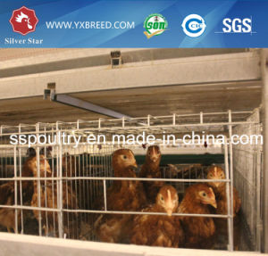 Galvanized Cage for Egg Layer Chicken pictures & photos