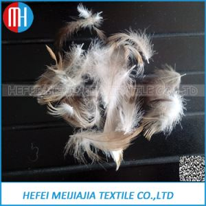 Cheap Promotional 2~4cm Washed Grey Duck Feather pictures & photos