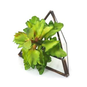 Air Plant Geometric Glass Terrarium for Flower pictures & photos