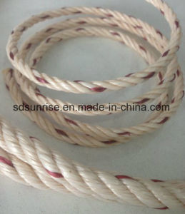 PP Danline Rope Beige with Red pictures & photos