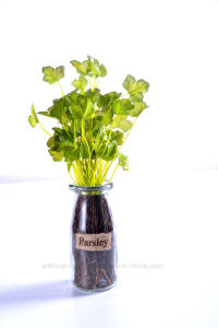 Various Artificial Herbs in Glass Vase for Public Decoration pictures & photos