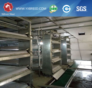 Poultry Farming Cages Equipment Made in China pictures & photos