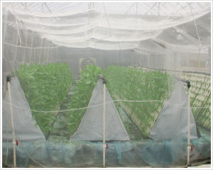 HDPE Plastic Mesh for Proof Insect pictures & photos