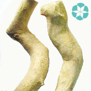 Tongkat Ali Extract / Eurycoma Longifolia Extract pictures & photos