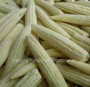 Frozen Vegetables Frozen Baby Corn Frozen Young Corn