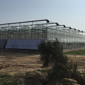 Best Selling Greenhouse Types of Glass Greenhouse pictures & photos