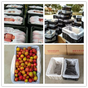 Automatic Non Woven Fruit Bag Making Machine pictures & photos