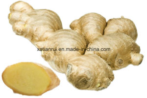 Factory Natural Ginger Extract Powder pictures & photos