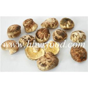 2.5-3cm Dried Deform K Shiitake Mushroom pictures & photos