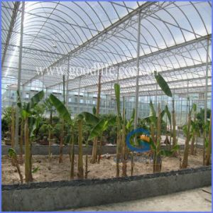 Transparent/Opal White/Blue/Green/Lake Blue/Bronze PC Polycarbonate Sheet for Greenhouse pictures & photos