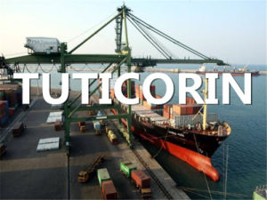 Ocean Freight From Qingdao, China to Tuticorin, India pictures & photos