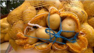 Fresh Potato (100g) pictures & photos