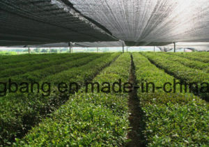 Galss Greenhouse with Inside Ground Cover Mat pictures & photos