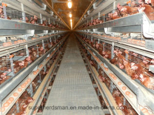 Super Herdsman Automatic Poultry Farm Equipment for Broiler Chicken Shed pictures & photos