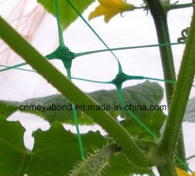 17*15cm Mesh Size Extruded Green Plant Support Net pictures & photos