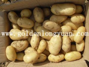 Holland Fresh Potato 2016 New Season pictures & photos