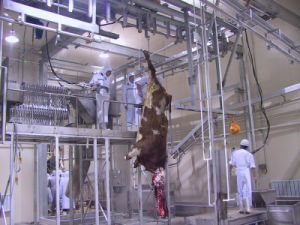 Cow Slaughterhouse Made Inchina pictures & photos