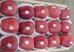 High Quality for Exporting Fresh Huaniu Apple pictures & photos