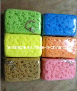 Bath Sponge (13B58) pictures & photos