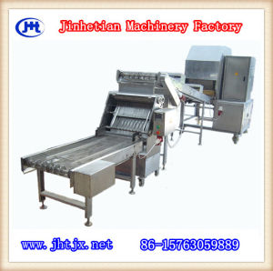 Square Spring Roll Wrappers/Sheet Machine pictures & photos