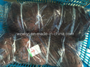 "210d/15ply X 3"" X100md X100m Nylon Multifilament Fishing Net pictures & photos"