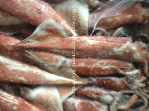 100-200g Frozen Japanese Squid pictures & photos