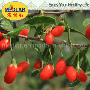 Medlar Health Care Food Chinese Wolfberry pictures & photos