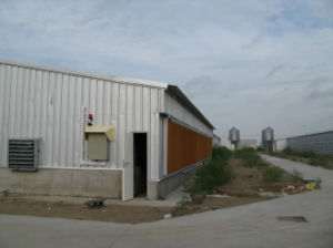 Galvanized Steel Structure Shed for Broiler Chicken pictures & photos
