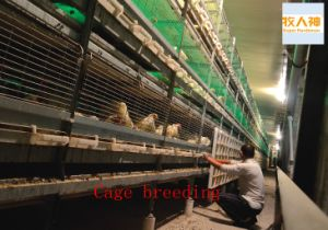 Cage Breeding for Chicken From Super Herdsman 2016 pictures & photos