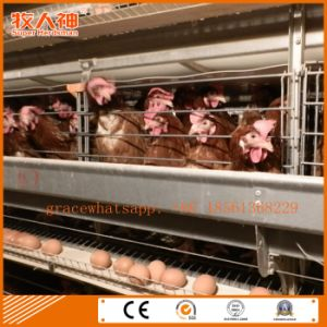 Automatic Poultry Battery Cage Farm Machinery for Layers From Factory pictures & photos